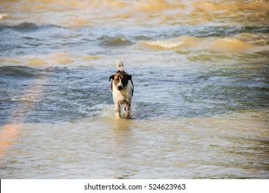 the dog run away from flood