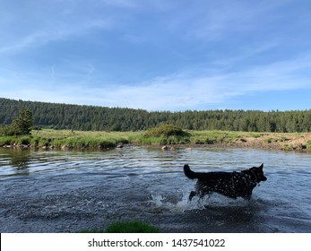 Dog running in a lake at the French Pyrenees