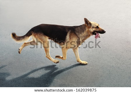 Dog running on the road