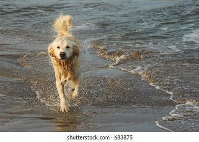 Dog running out of water