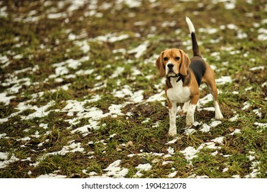 Dog running in a park during winter time