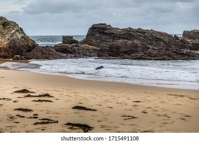 A dog running at the rocks of the beach at the Mystery Bay in New South Wales, Australia at a cloudy and windy day in summer with strong waves in the ocean.
