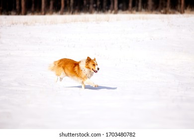 Dog running through heavy snow