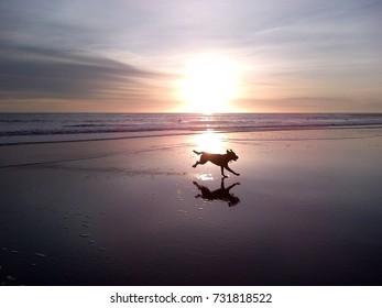 Dog running through Sunset