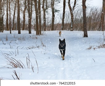 Dog running through the woods during a snowfall.
