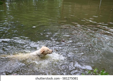 Dog Running Water