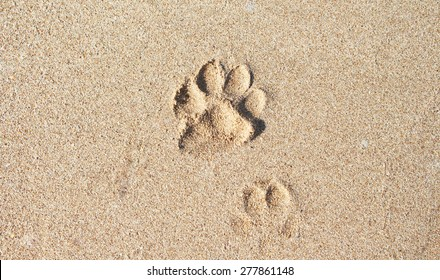 The dog 's footprints in sand