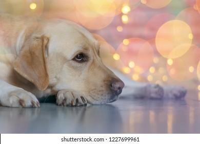 The dog is sad one on Christmas night