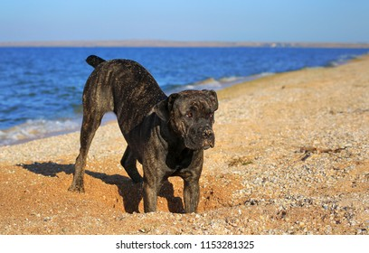Dog in the sand by the sea