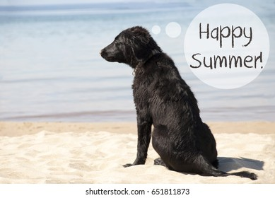 Dog At Sandy Beach, Text Happy Summer
