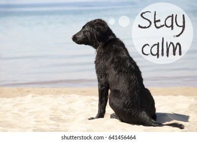 Dog At Sandy Beach, Text Stay Calm