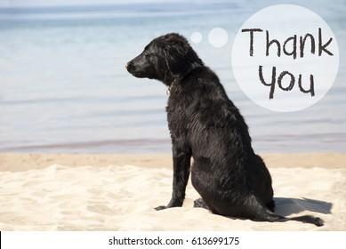 Dog At Sandy Beach, Text Thank You