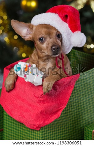 fe5a23f13b2 Dog Santa Claus Hat Paw Holding Stock Photo (Edit Now) 1198306051 ...