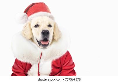 dog in santa closes