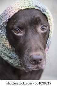 Dog in a scarf