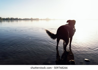 Dog in sea
