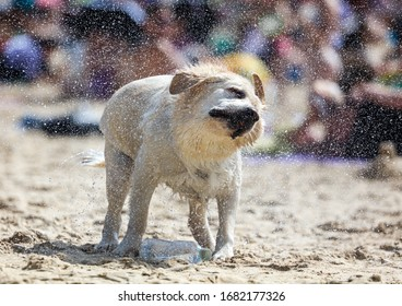 Dog shakes off water from wool on the seashore.