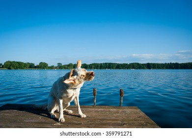 Dog is shaking beside the lake.