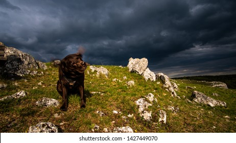 A dog shaking in front of a dark, dangerous heaven.