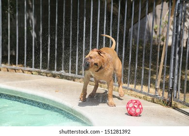 Dog shaking off water by the side of the pool
