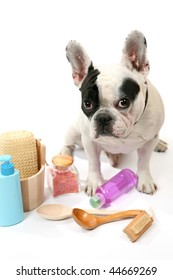 Dog and shampoo