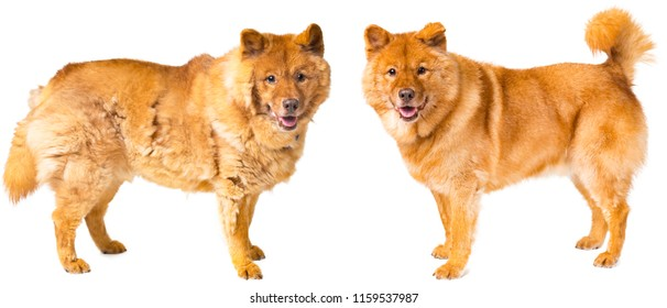 Dog shedding - before and after grooming