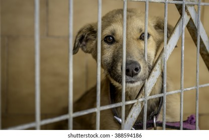 Dog from the Shelter