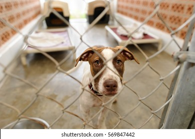 Dog shelter is is a beautiful dog in an animal shelter looking through the fence wondering if anyone is going to take him home today.