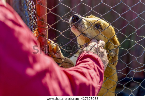 Dog in the shelter at fance