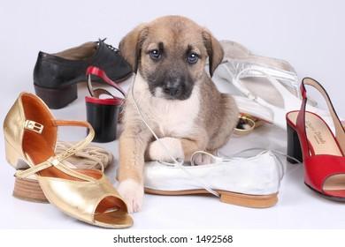 dog & shoes