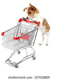 Dog with shopping cart isolated on white