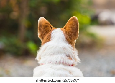 dog show his ears, beautiful close-up dog from behind view