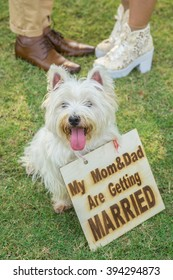 Dog with sign says its owners are getting married with a couple blur in the background
