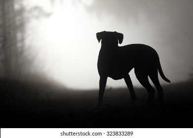 dog as silhouette in a forest