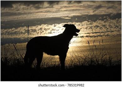 dog silhouette on a beach sunset!