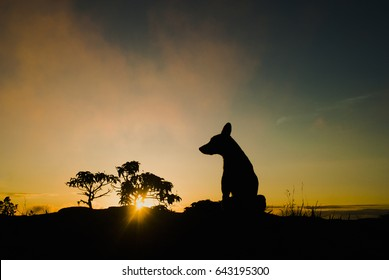 Dog silhouette at sunrise in Brazil