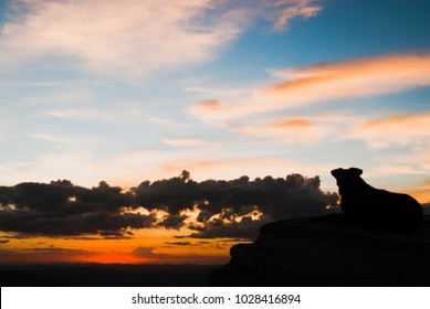 Dog silhouette at sunset in Brazil