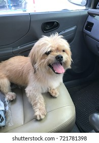 A dog sit  in car to travel.