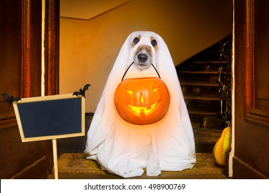 dog sit as a ghost for halloween in front of the door  at home entrance with pumpkin lantern or  light , scary and spooky with placard or banner