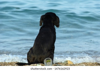 the dog sits alone on the sand by the sea and looks into the distance. Concept - loneliness
