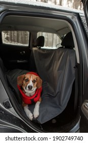 the dog sits in the car on a protective cover
