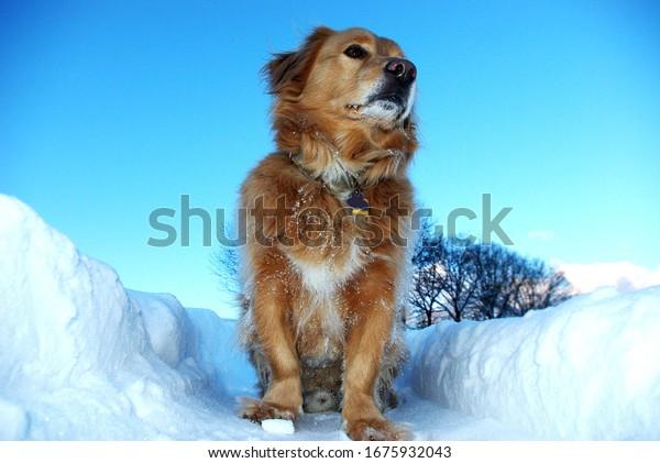 dog-sits-deep-snow-happy-600w-1675932043