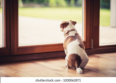 the dog sits at the glass door and wants to go outside