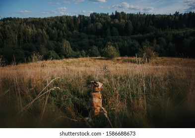 dog sits and looks at the summer forest