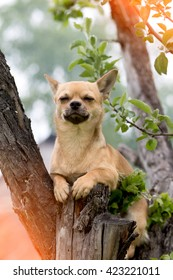 The dog sits on a tree and blinks the eyes from pleasure
