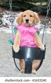 a dog is sitting in a baby swing