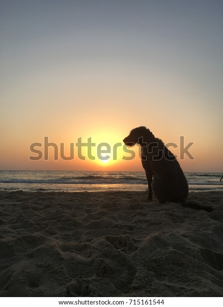 Dog sitting at a beach at sunset