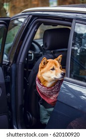 A dog is sitting in the car