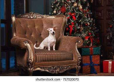 dog sitting in the chair next to the Christmas tree