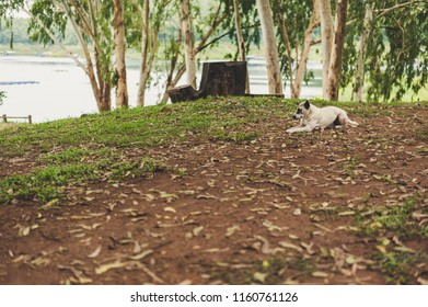 Dog sitting in the forest.